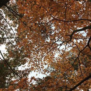 秋鳴子峡紅葉画像